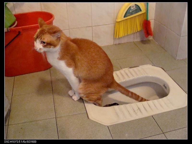 חתול בשירותים בסין